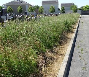 herbes folles dans le cimetière