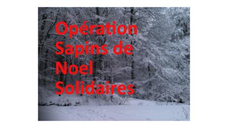 Opération Sapins de Noêl