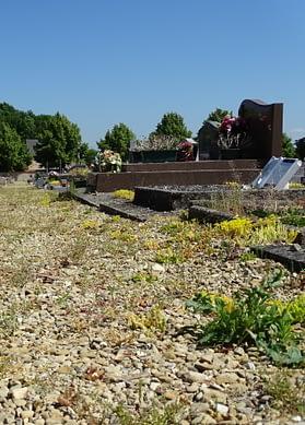 Les herbes folles se répandent entre les tombes